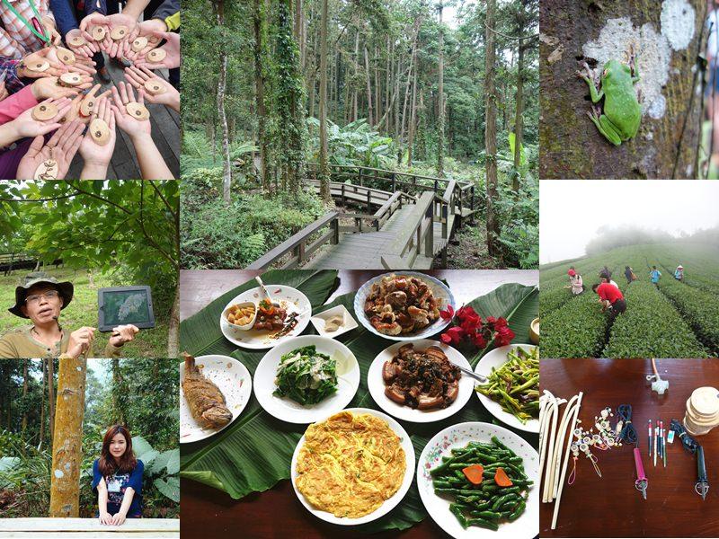 嘉義阿里山國家風景區 | 土匪守護山林生態體驗,龍美景觀步道、山林午餐饗宴、茶園秘境,寓教於樂一日遊。