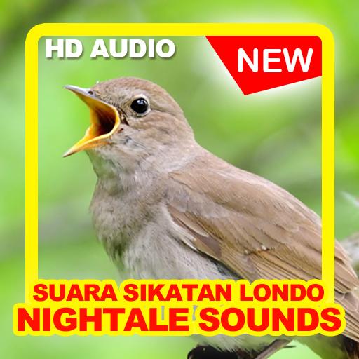 Kicau Burung Sikatan Londo - Offline 1.1 icon