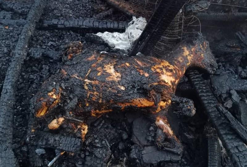 30 ekor kambing rentung selepas kandang milik sepasang warga emas terbakar awal Rabu. - Foto ihsan JBPM