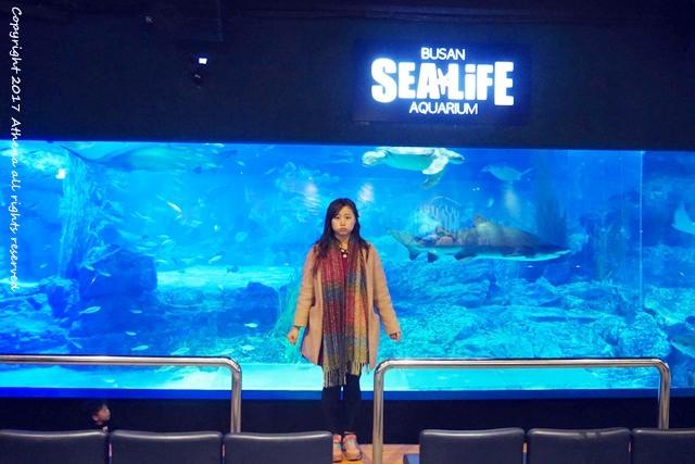 韓國 ▌釜山自由行:海雲台 SEA LIFE釜山水族館 親子行程推薦 鯊魚餵食秀超酷