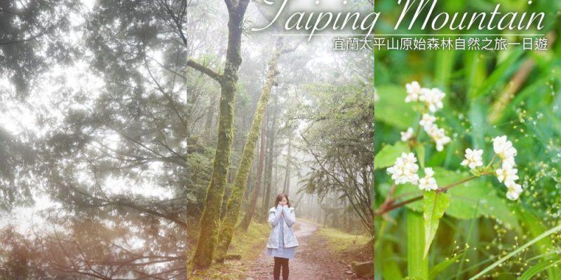 宜蘭太平山 ▌原始森林自然之旅一日遊  感受煙霧瀰漫的台灣風景 #小團特色路線