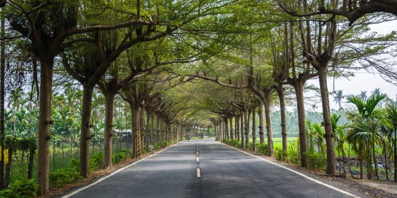 |屏東景點|泗林健走步道,一公里長的小葉欖仁綠色隧道