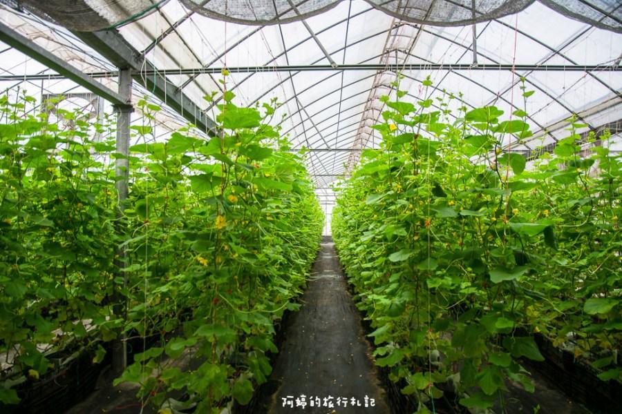  苗栗景點 彎麗愛情果園,一起到溫室裡採收愛情果