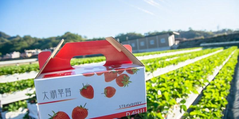 |苗栗景點|滿意牛奶蜜草莓農場,高架草莓園讓你站著採草莓不腰痠