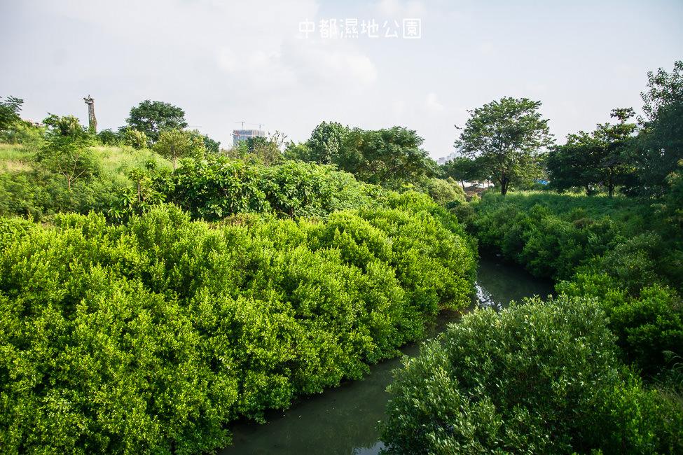 |高雄景點|中都濕地公園,隱身在都市裡的濕地,這裡也有一個龍貓小隧道