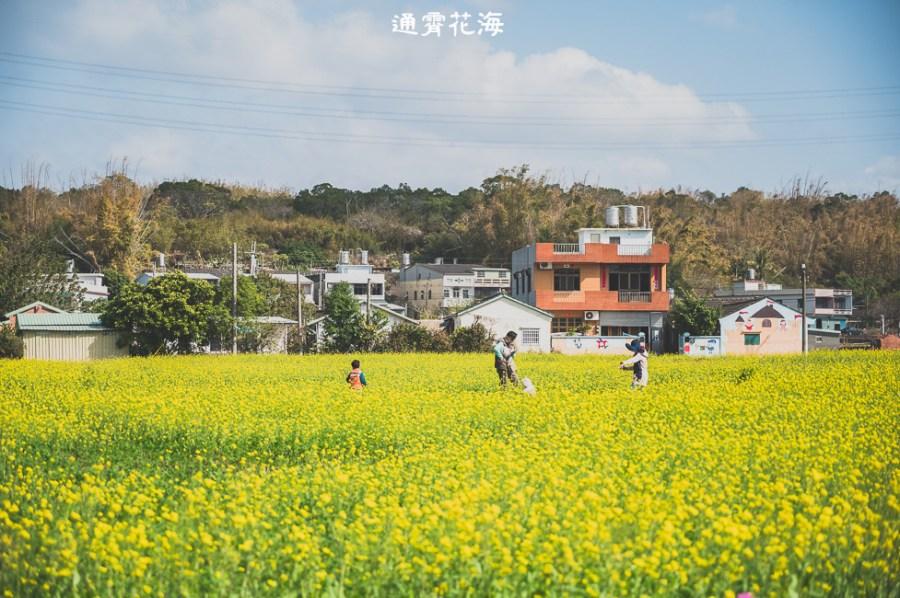  苗栗景點 通霄花海,高鐵橋下的浪漫景色,黃澄澄的油菜花田好療癒