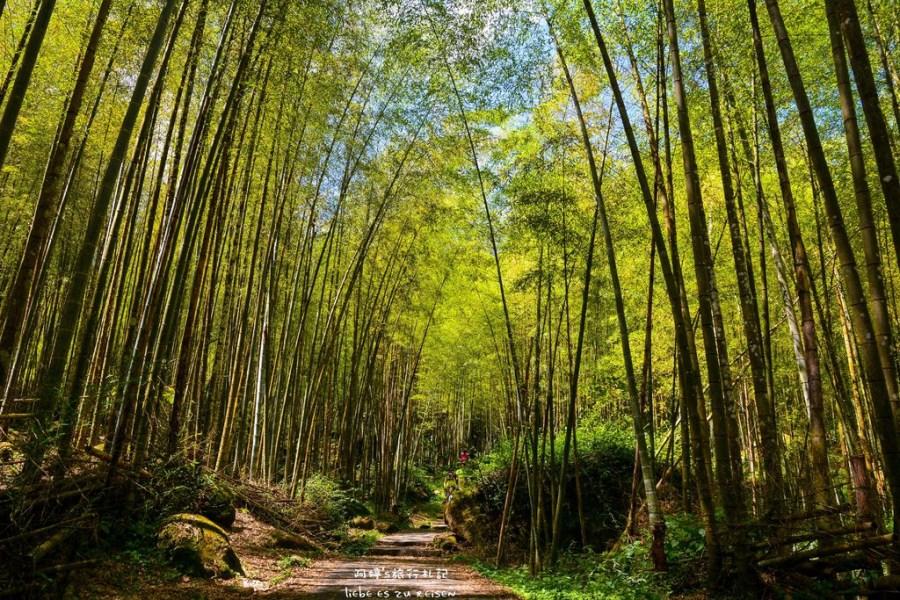 Nantou|南投‧鹿谷|炎炎夏日上山避暑去,溪頭自然教育園區