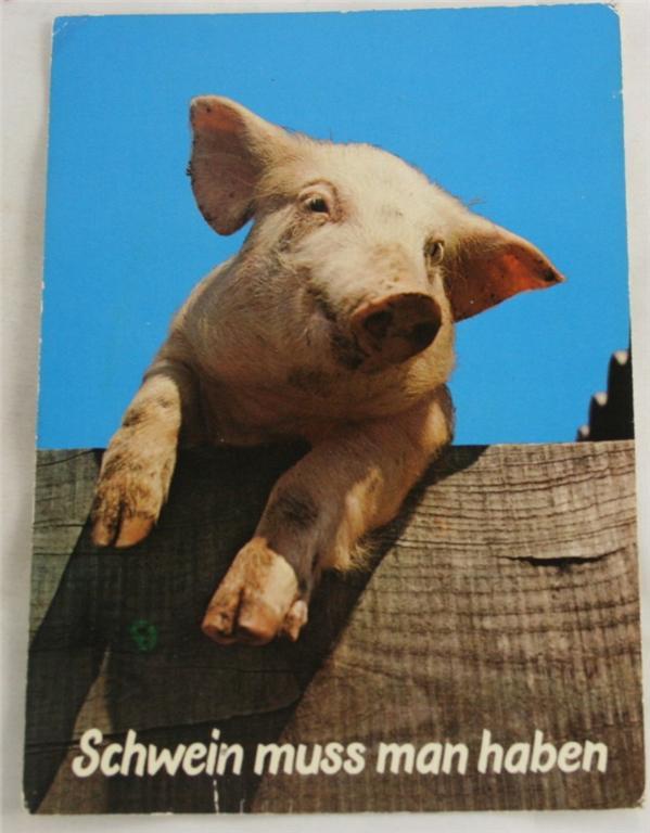 vintage postcard, Germany, novelty, pig, Schwein muss man haben