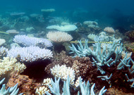 The Great Barrier Reef has undergone a