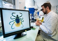 Study of a Lyme vector tick in a laboratory of ANSES