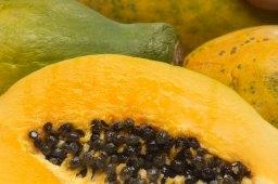 「papaya fermented」の画像検索結果