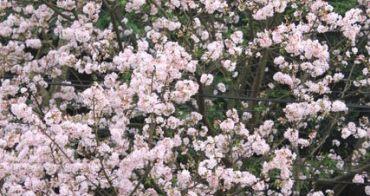 台北也有桃花園-天元宮
