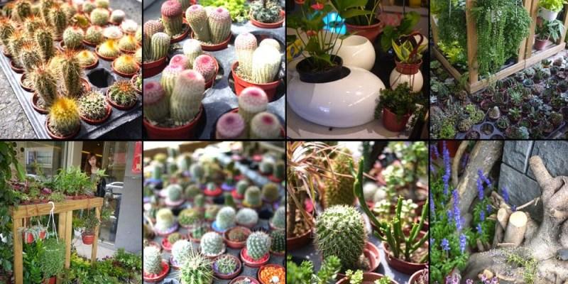 【極度勸敗】千萬不要走進台南日光夏蘭植物工房,否則你會沉迷(邀訪)