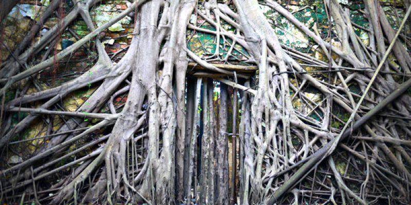 【大自然奇景】鬼斧神工的安平樹屋-魔幻般的電影造景
