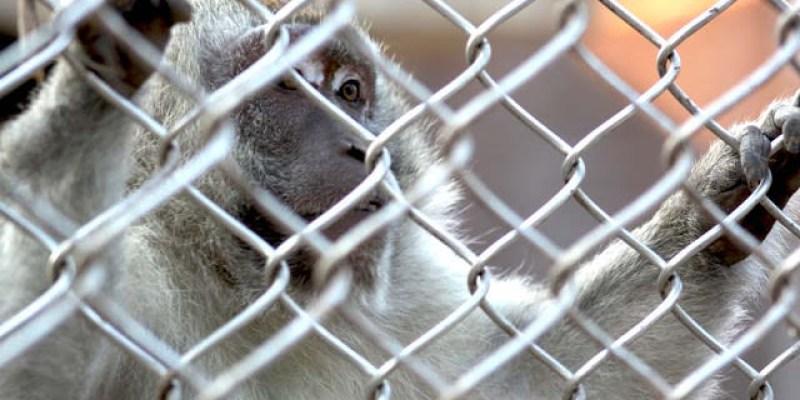 【金門美食旅遊】傳說中的動物園-畜試所