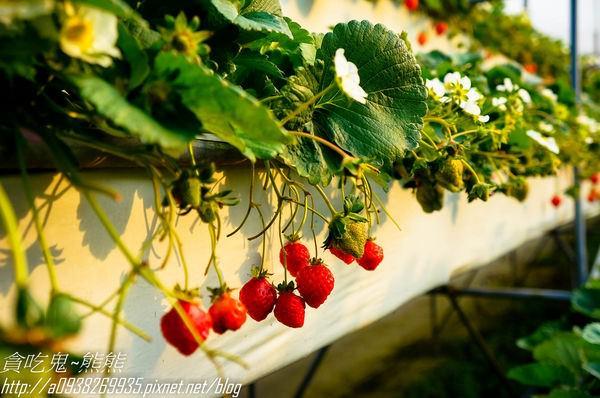 【旅遊】大湖旅遊/草莓季