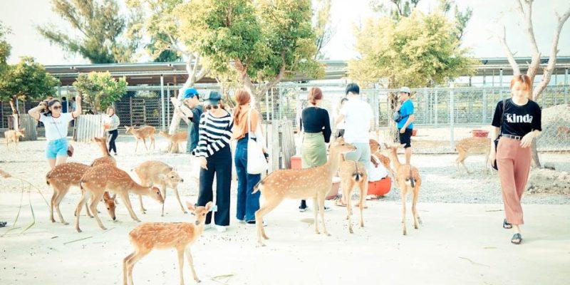【旅遊】恆春旅遊/鹿境-找回童年快樂回憶中的小鹿斑比
