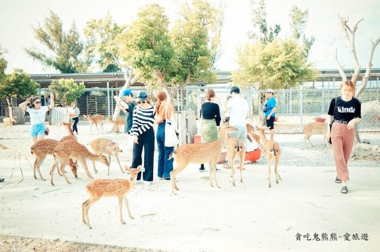 恆春旅遊 鹿境-找回童年快樂回憶中的小鹿斑比