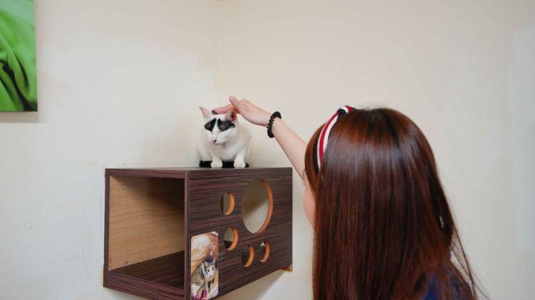 屏東美食 宅貓咖啡Coffee house cat-寵物餐廳,與貓貓們共度療癒時刻吧