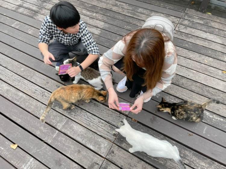 台東旅遊 山里車站-卑南鄉嘉豐村山里部落一人車站餵貓玩貓去