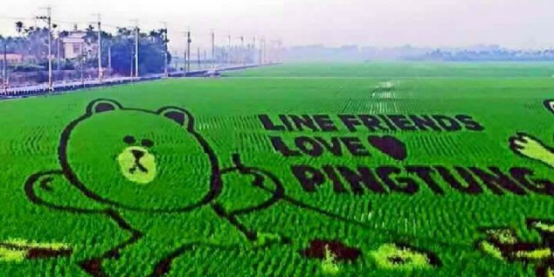 【屏東】。屏東國際稻田彩繪藝術節3/28登場 全球第一座LINE彩稻田即將可愛亮相