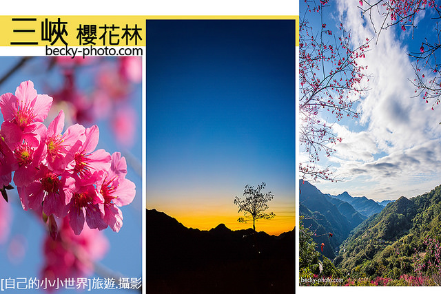 【台北】。新北三峽景觀餐廳有料賞櫻季~櫻花步道滿開 [花岩山林]