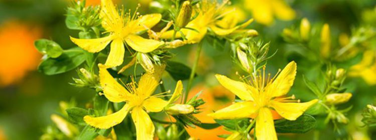 Resultado de imagen de plantas esotericas