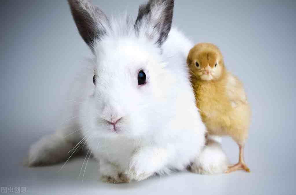 如何养好宠物兔?