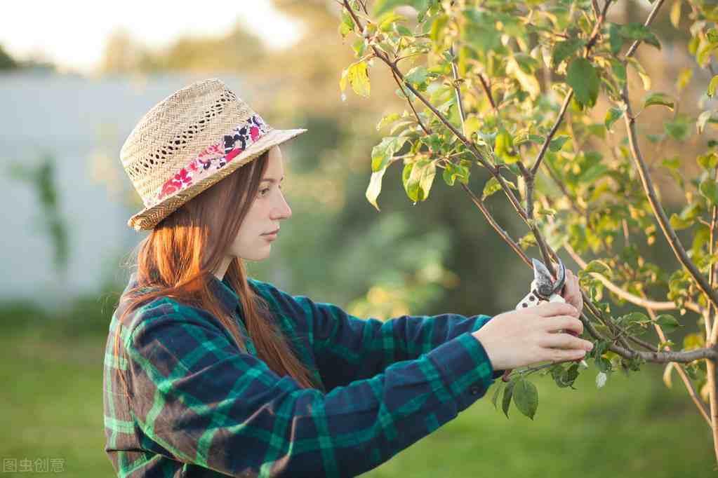 剪枝正确方法,不同时期和树龄都不同,掌握好时间和方法