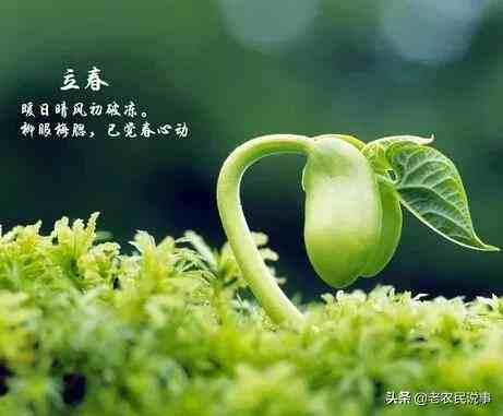 """今日立春,立春有哪些禁忌?俗话说""""立春四吃四不做""""指哪些?"""