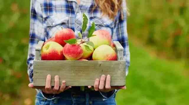 苹果的营养价值怎么样?推荐每天吃吗?