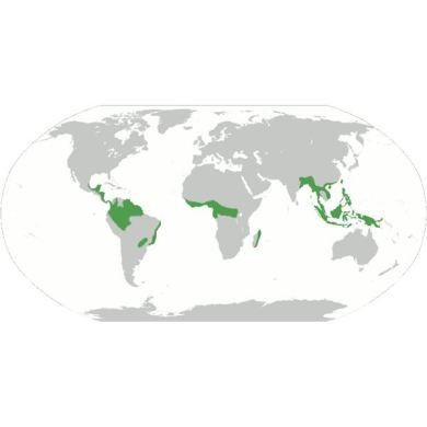 Map of the tropical rainforest biome agricshow nursery world map showing tropical rainforest full hd maps locations amazon rainforest map tropical rainforest biome project gumiabroncs Gallery