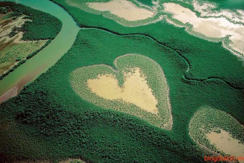 Rừng ngập mặn New Caledonia, Pháp