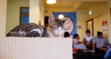 台中南屯│浪浪別哭-黎明新村裡的流浪動物中途餐廳,可愛毛小孩陪你下午茶