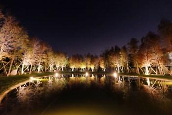新竹關西│大樂之野景觀餐廳-落羽松包圍著愛心池塘,晚上多了唯美浪漫
