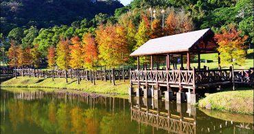 台北落羽松新秘境 | 湖岸落羽松美景就在原住民文化主題公園.冬季景色彷彿台北版雲山水