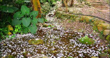 桃園桐花步道 | 大溪十一指桐花古道,百年茄冬樹與溪流相伴桐花步道