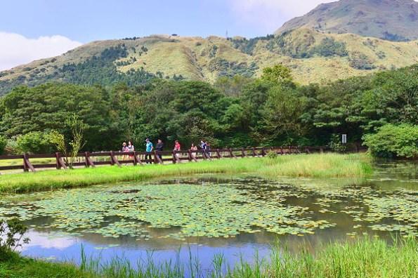 台北陽明山 冷水坑步道,30分鐘帶你走訪四大景點牛奶湖、菁山吊橋、冷水坑生態池、冷擎步道落羽松
