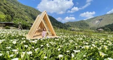 台北陽明山海芋季》名陽匍休閒農莊, 竹子湖最新海芋歐風木屋, 在海芋田盪鞦韆
