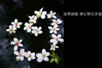 [ 苗栗 ] 頭屋-夢幻桐花步道