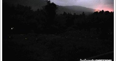 [ 嘉義阿里山螢火蟲季 ] 奮起湖賞螢火蟲