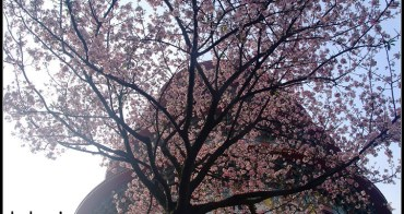 [ 新北市賞櫻景點 ] 淡水無極天元宮--賞櫻花