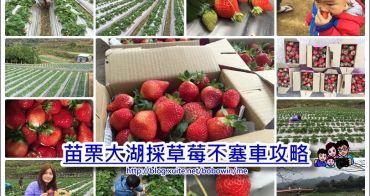 《 苗栗草莓季 》苗栗大湖採草莓不塞車攻略路線懶人包&行程規劃