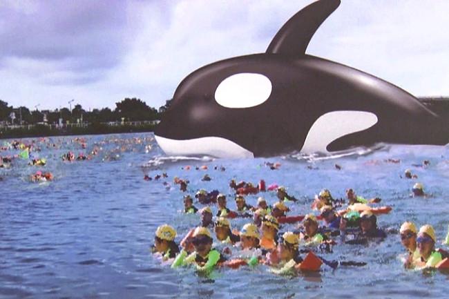 台南安平港驚見虎鯨!全球最大海上藝術裝置-暑假期間超人氣打卡新景點~
