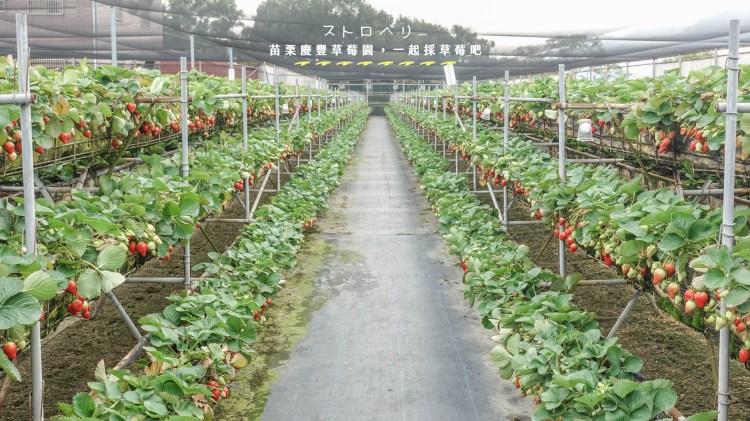 苗栗 | 慶豐草莓園,跟閨密一起採草莓,草莓牛奶x草莓香腸x草莓冰沙