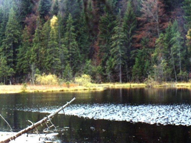 Lacul-Negru
