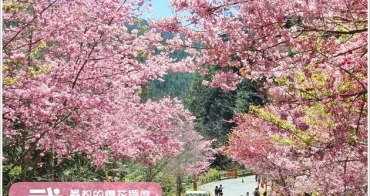 『櫻花前線』最粉的夢幻國度~武陵農場櫻花季。(2/14花況)