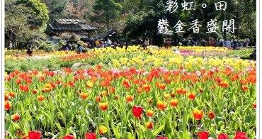 『桃園旅遊』桃源仙谷,艷麗鬱金香妝點成繽紛彩虹田。