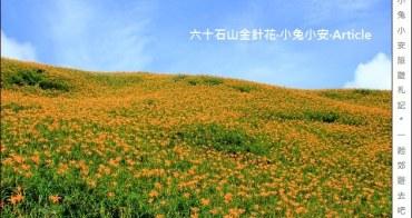 『花蓮輕旅行』花東海岸賞金針花,三天兩夜行程分享。