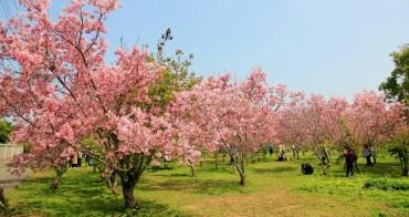 新社櫻花季 | 新賞櫻點!月湖莊園浪漫粉紅風暴,昭和櫻夢幻櫻花林!